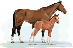 Warmblood horse mare and foal standing Stock Photo