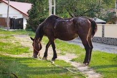 Warmblood-Pferd steht auf einem Weg zum Haus Stockbild
