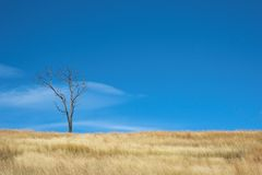 Warme afrikanische Winterlandschaft Stockbilder