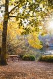 Warme de herfstmiddag in een botanisch park stock foto's