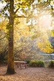 Warme de herfstmiddag in een botanisch park royalty-vrije stock fotografie