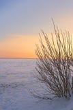 Warme de winterzonsondergang Stock Afbeelding