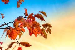 Warme Farben des Herbstes Lizenzfreies Stockfoto