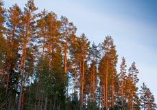 Warme gekleurde bomen Royalty-vrije Stock Foto