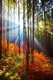 Warme Herbstlandschaft im Wald Stockfotografie