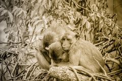 Warme het koesteren apen op treetop De aapfamilie koestert elk o Stock Foto