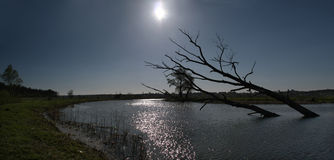 Warme kalme zonsondergang over moerassen in de Oekraïne, Kiev Stock Foto