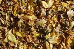 Warme kleuren van de herfst - gevallen bladerenachtergrond Royalty-vrije Stock Foto