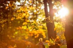 Warme kleurrijke bladeren met zonnestraal Stock Afbeeldingen
