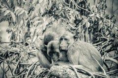 Warme umarmende Affen auf Treetop Affefamilie umarmt jedes O Lizenzfreies Stockbild