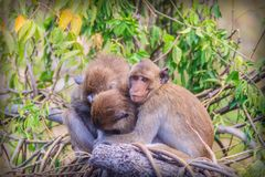 Warme umarmende Affen auf Treetop Affefamilie umarmt jedes O Stockbilder