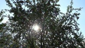 Warme vleugel die de wind van de bladerenzomer ritselen stock footage