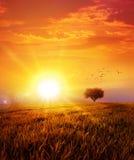 Warme zonsondergang op de wilde weide stock afbeeldingen