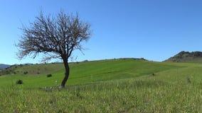 Warmer Frühling in Sardinien stock video footage