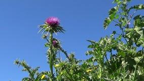 Warmer Frühling in Sardinien stock footage