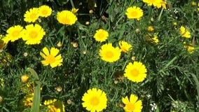 Warmer Frühling in Sardinien stock video