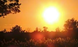 Warmer goldenes Glühen-Fall-Sonnenuntergang stockfoto