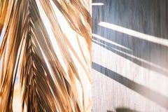 Warmer Morgen des schwarzen Wandleuchtesegeltuch-Fensters der Hintergrundschattenpalmblätter weißen stockfotos