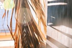 Warmer Morgen des schwarzen Wandleuchtesegeltuch-Fensters der Hintergrundschattenpalmblätter weißen stockbilder