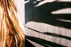 Warmer Morgen des schwarzen Wandleuchtesegeltuch-Fensters der Hintergrundschattenpalmblätter weißen lizenzfreie stockfotografie