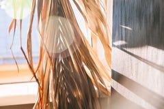 Warmer Morgen des schwarzen Wandleuchtesegeltuch-Fensters der Hintergrundschattenpalmblätter weißen lizenzfreie stockbilder
