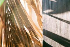 Warmer Morgen des schwarzen Wandleuchtesegeltuch-Fensters der Hintergrundschattenpalmblätter weißen stockbild