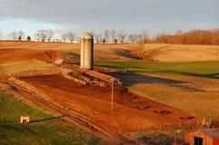 Warmer Sonnenaufgang auf der Rinderfarm Stockfotos