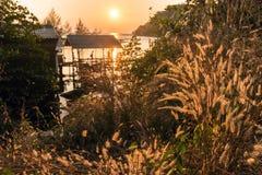Warmer Sonnenuntergang auf hohem Gras stockfotos