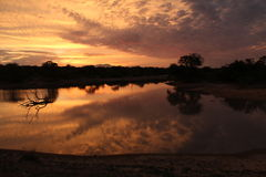 Warmer Sonnenuntergang mit toter Baumreflexion im Wasser Lizenzfreie Stockfotos