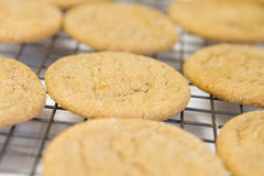 Warmer Sugar Cookies Stockfoto