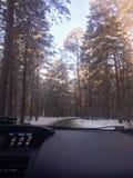 Warmer Winter Stockfoto