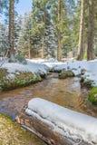 Warmer Wintertag mit Schnee Stockbilder