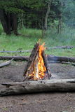 Warming by the campfire. A large roaring campfire in the woods Stock Photos