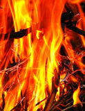 Warming flames Royalty Free Stock Images