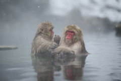 Warming in hot springs royalty free stock photo