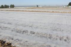 Warming the Soil-2 Stock Photos