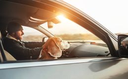Warmly dressed man enjoying the modern car driving with his beagle dog sitting on the co-driver passenger seat. Traveling with pe