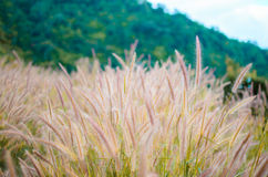 The warmness grass. The field that there is warmness grass. look like dream world Stock Photography