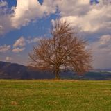 WarmSpring tree Royalty Free Stock Images