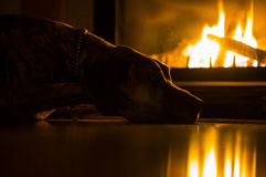 Warmth and Coziness. A brindle Great Dane is laying on a floor next to a fire place. The dog is highlighted by the warm light of the flame Royalty Free Stock Images