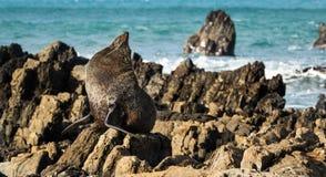 Warmth Seal Royalty Free Stock Photo