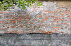 Warn brick wall and leafes Royalty Free Stock Photo