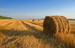 Field after harvesting.Straw bales at sunset. royalty free stock images