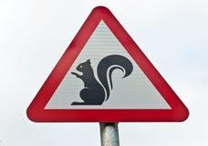 Warnen… Eichhörnchen!! lizenzfreie stockbilder