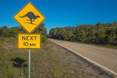 Warnendes Känguru-Skifahren Lizenzfreie Stockfotografie