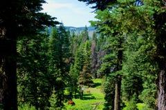 Warner góry, Modoc okręg administracyjny, Kalifornia Zdjęcia Stock