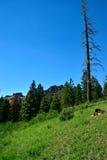 Warner Mountains, le comté de Modoc, la Californie photo stock
