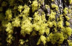 Warner Mountains, Modoc County, California Royalty Free Stock Photo