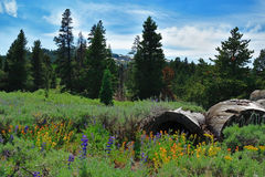 Warner Mountains, Modoc-Provincie, Californië Royalty-vrije Stock Fotografie