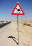 Warning of Camel Crossing the Road. Road sign warning motorist of camels crossing the road in Israel Stock Photo